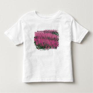 Canada, Quebec, Gaspe. Purple Lythrum Flowers, T Shirt