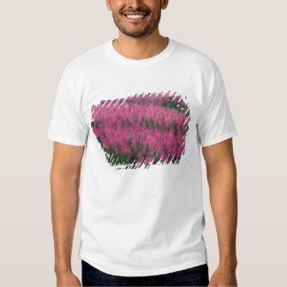 Canada, Quebec, Gaspe. Purple Lythrum Flowers, Tee Shirt