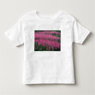 Canada, Quebec, Gaspe. Purple Lythrum Flowers, Toddler T-shirt