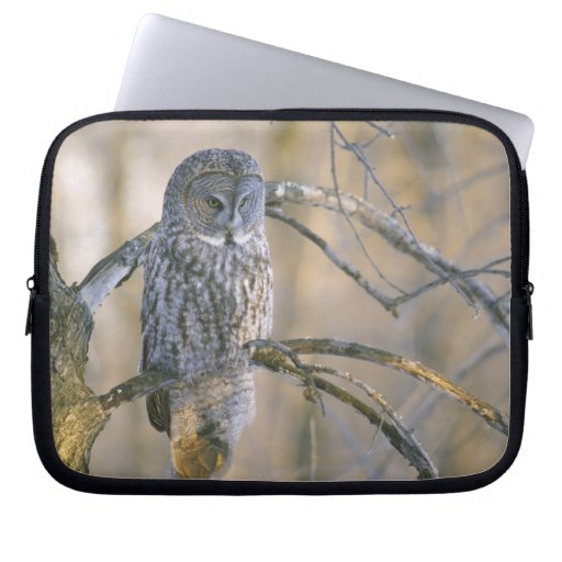 Canada, Quebec. Great gray owl perched on tree Laptop Sleeves
