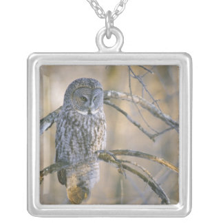 Canada, Quebec. Great gray owl perched on tree Personalized Necklace