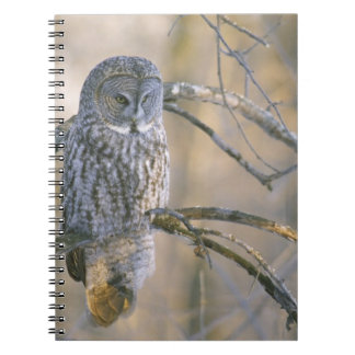 Canada, Quebec. Great gray owl perched on tree Spiral Note Books
