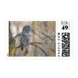 Canada, Quebec. Great gray owl perched on tree Postage Stamp