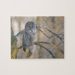 Canada, Quebec. Great gray owl perched on tree Jigsaw Puzzle