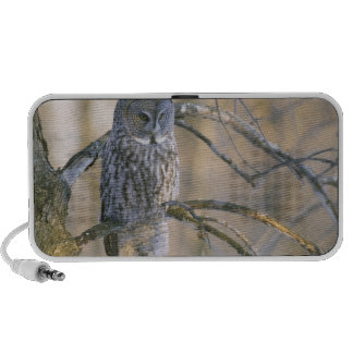 Canada, Quebec. Great gray owl perched on tree Portable Speaker