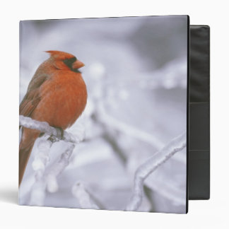 Canada, Quebec. Male northern cardinal on limb 3 Ring Binder