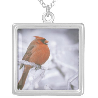 Canada, Quebec. Male northern cardinal on limb Necklaces