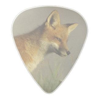 Canada, Quebec. Red fox cub at sunrise. Credit Acetal Guitar Pick