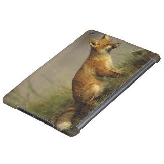 Canada, Quebec. Red fox cub at sunrise. Credit iPad Air Cover