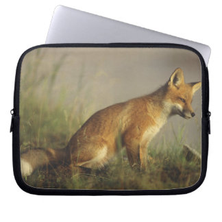Canada, Quebec. Red fox cub at sunrise. Credit Laptop Computer Sleeves