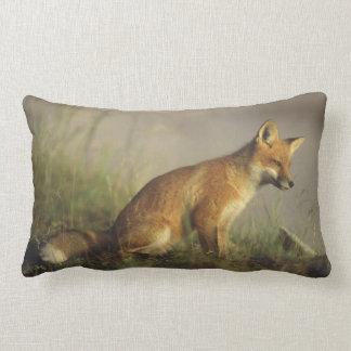 Canada, Quebec. Red fox cub at sunrise. Credit Lumbar Pillow