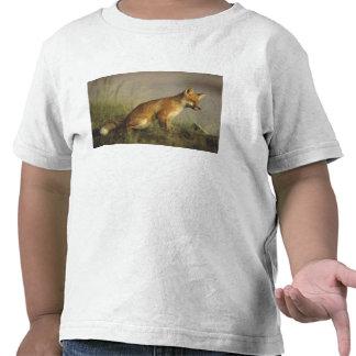 Canada, Quebec. Red fox cub at sunrise. Credit T Shirt