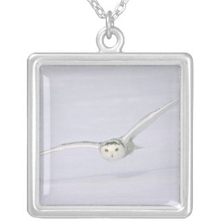 Canada, Quebec. Snowy owl flies low over snow. Square Pendant Necklace