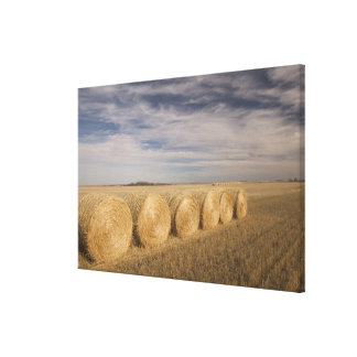 Canada, Saskatchewan, Craik: Hayrolls / Autumn Canvas Print