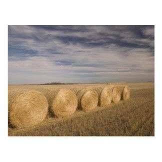 Canada, Saskatchewan, Craik: Hayrolls / Autumn Post Cards