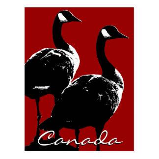Canada Souvenir Postcards Canada Geese Cards