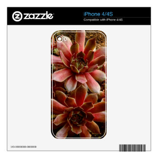 Canada, . Succulent plant Decals For iPhone 4S