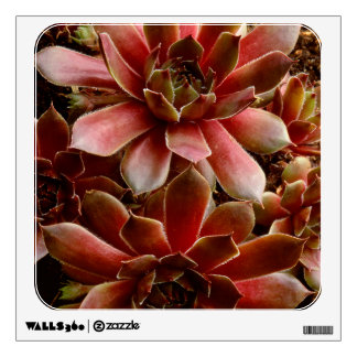 Canada, . Succulent plant Wall Decal