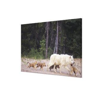 Canadá, territorios del noroeste, gran lago auxili lienzo envuelto para galerias