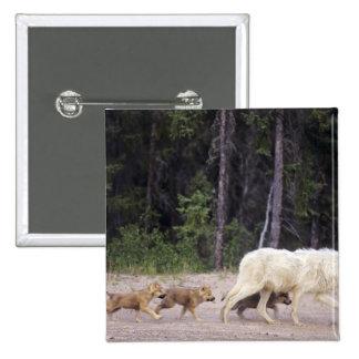 Canadá, territorios del noroeste, gran lago auxili pin cuadrada 5 cm