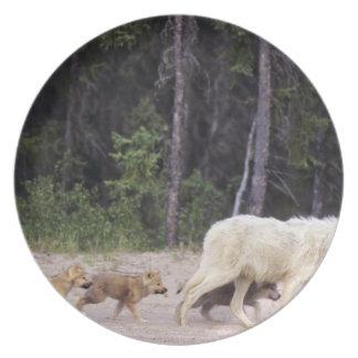 Canadá, territorios del noroeste, gran lago auxili platos