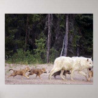 Canadá, territorios del noroeste, gran lago auxili póster