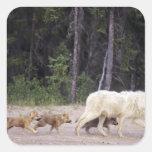 Canadá, territorios del noroeste, gran lago calcomanías cuadradas