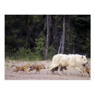Canadá, territorios del noroeste, gran lago tarjeta postal