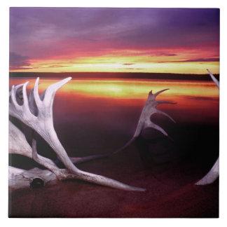 Canadá, territorios del noroeste, lago whitefish tejas