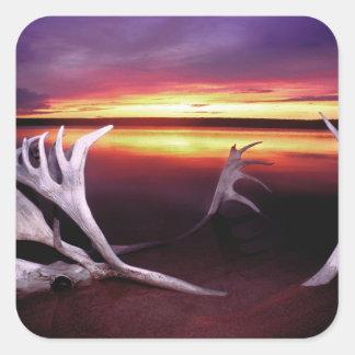 Canadá, territorios del noroeste, lago whitefish calcomanía cuadrada