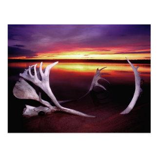Canadá, territorios del noroeste, lago whitefish tarjeta postal