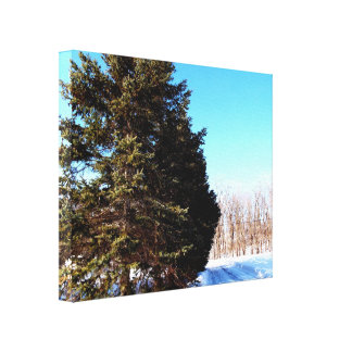 Canada Winter Canvas Print