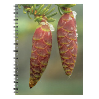 Canada, Yukon, Black Spruce Cones Notebook