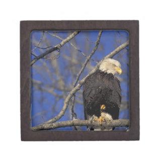 Canada, Yukon Territory, Kluane National Park. 2 Premium Gift Boxes