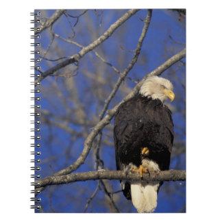 Canada, Yukon Territory, Kluane National Park. 2 Spiral Notebook