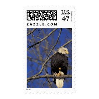 Canada, Yukon Territory, Kluane National Park. 2 Stamp