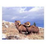 Canadensis del Ovis de dos espolones del carnero c Arte Con Fotos