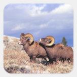 Canadensis del Ovis de dos espolones del carnero Calcomania Cuadradas Personalizada
