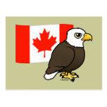 Canadian Bald Eagle Postcard