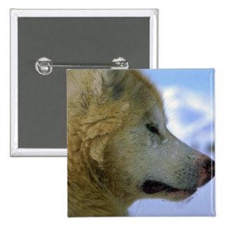 Canadian Eskimo sled dog Pins
