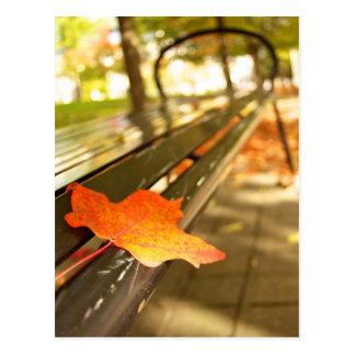 Canadian Fall (Autumn) Postcard