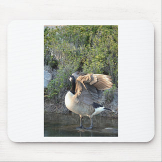 Canadian Feather Show Mouse Pad