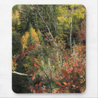 Canadian Forest Autumn Scene Mouse Pad