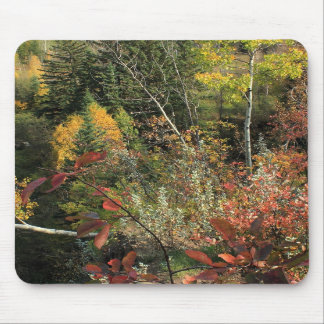 Canadian Forest Autumn Scene Mousepads