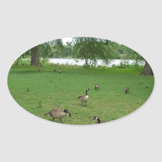 Canadian Geese by the Lake during Summer Oval Sticker