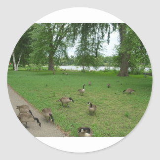 Canadian Geese by the Lake during Summer Round Stickers