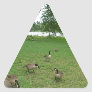 Canadian Geese by the Lake during Summer Triangle Sticker