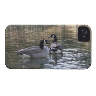 Canadian Geese Case-Mate iPhone 4 Case