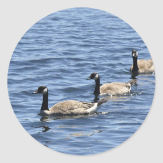 Canadian Geese Classic Round Sticker