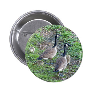 Canadian Geese Family Pinback Button
